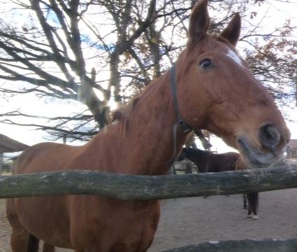 Pferd 2